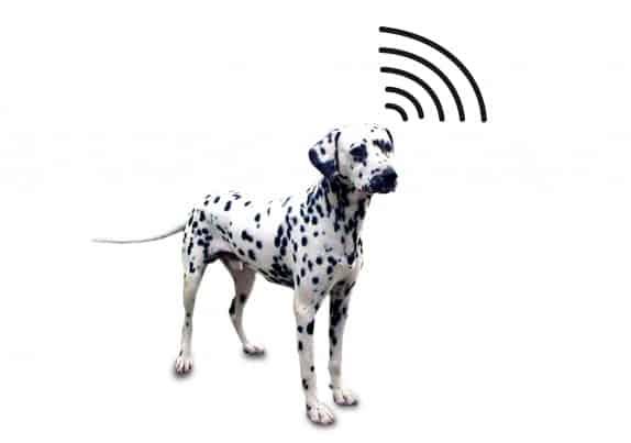 dognamedwifi