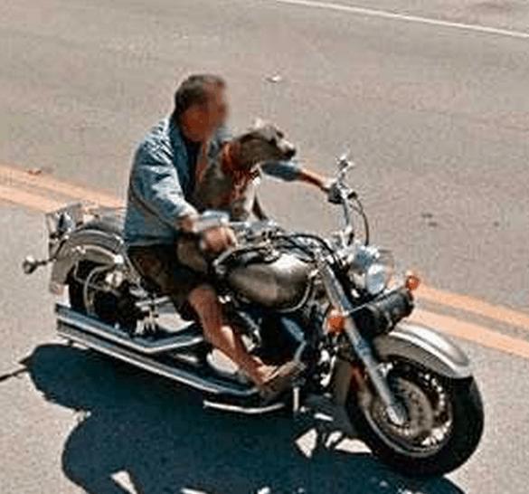 Man and Dog on Motor