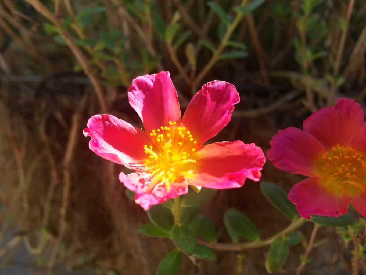 Note 2 macro flower