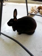 Note 2 rabbit