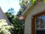 Note 2 spider