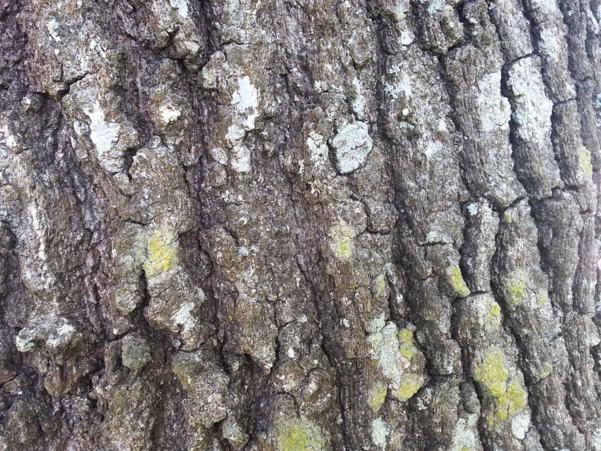 Note 2 tree