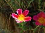 Note 3 macro flower