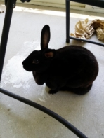 Note 3 rabbit