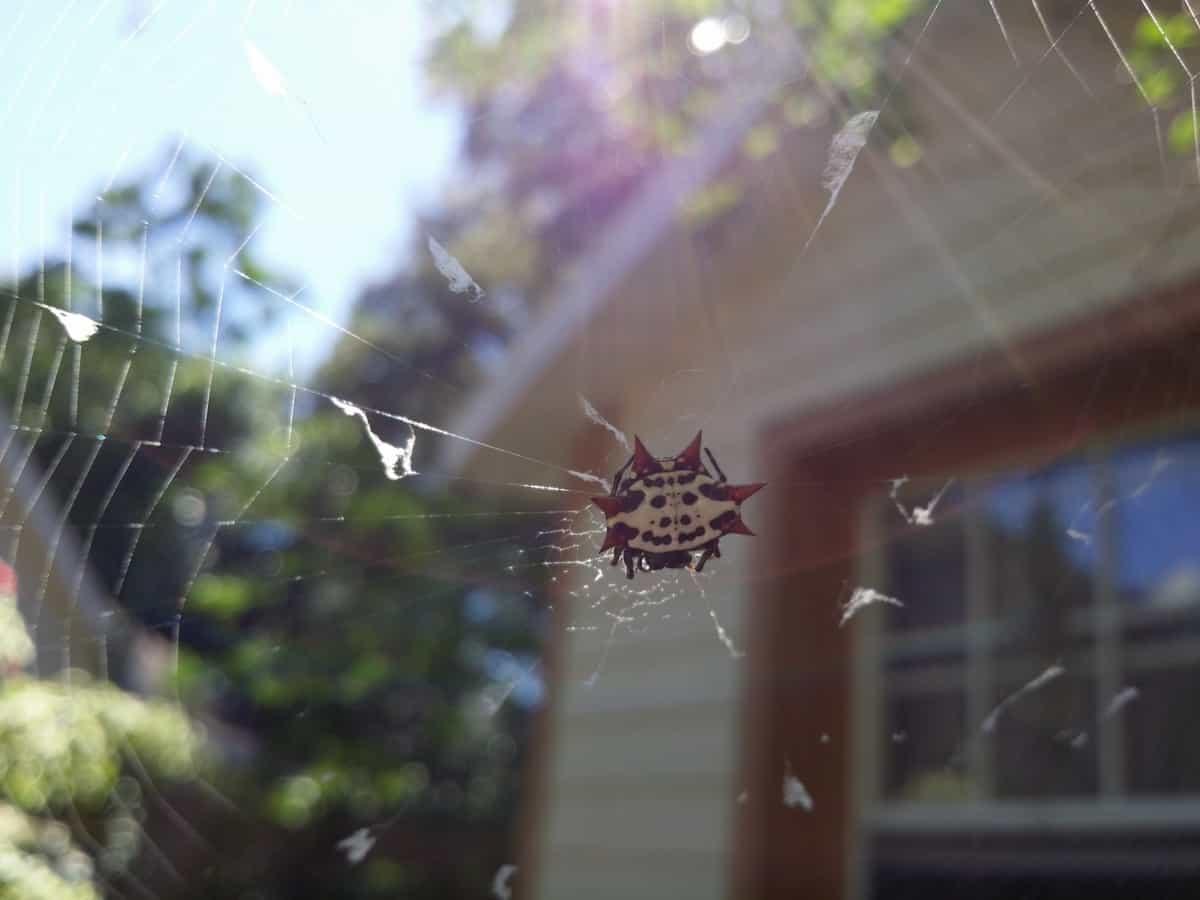Note 3 spider
