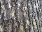 Note 3 tree