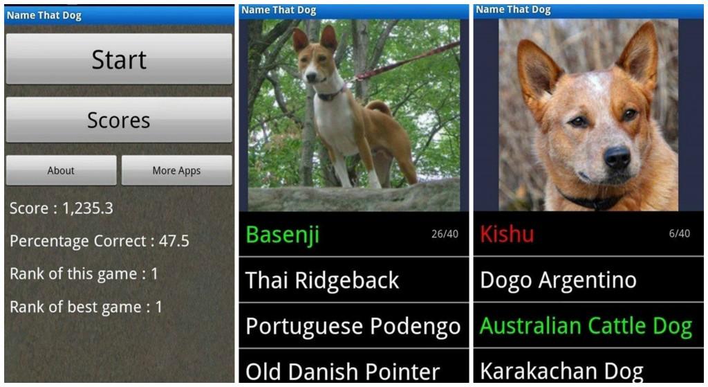 Dog Breedss Collage