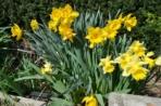 flowers slr