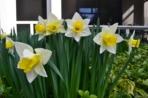 flowers2 slr