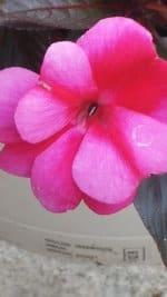G3 Red Flower 1