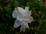 Meizu-MX4-Camera-flowers-4