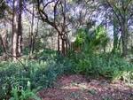 Meizu-MX4-Camera-forest-HDR
