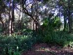 Meizu-MX4-Camera-forest-regular