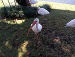 Meizu-mx4-shots-ibis