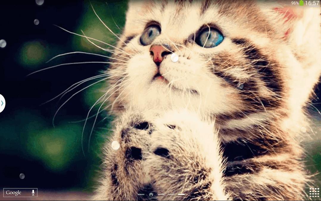 cute catpaper
