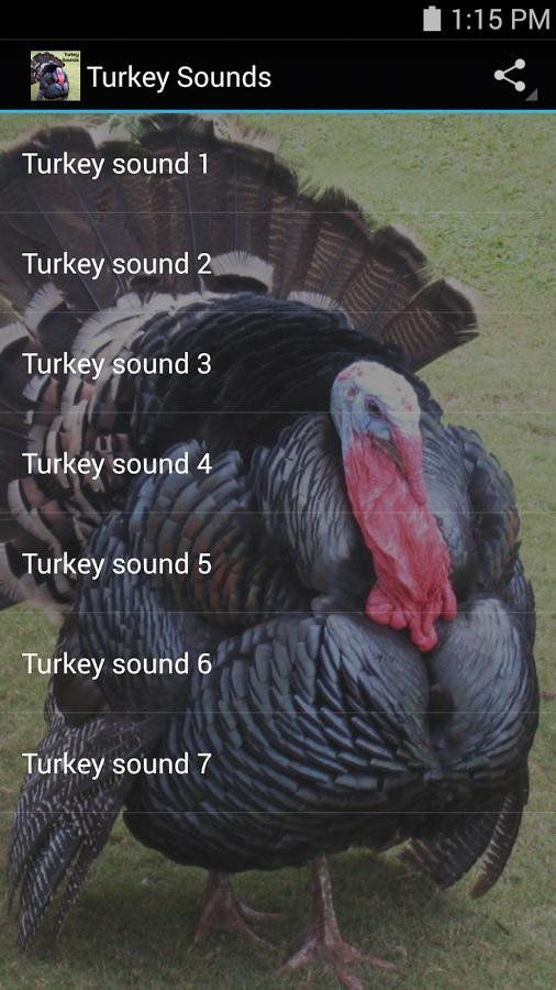 Turkey Sounds