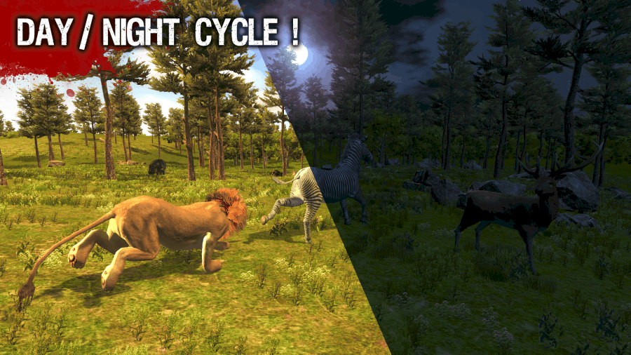 Wild Life Lion Night cycle