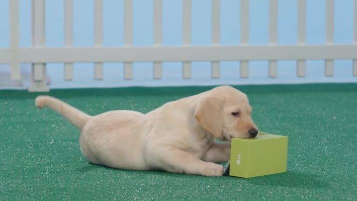 LG G5 Furry Friends unbox