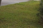 grass 6p