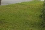 grass s7