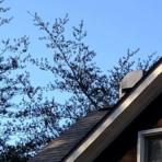 tree roof 6p