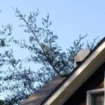 tree roof s7