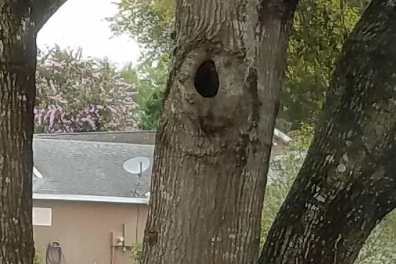 tree s7