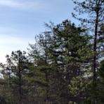 trees 6p