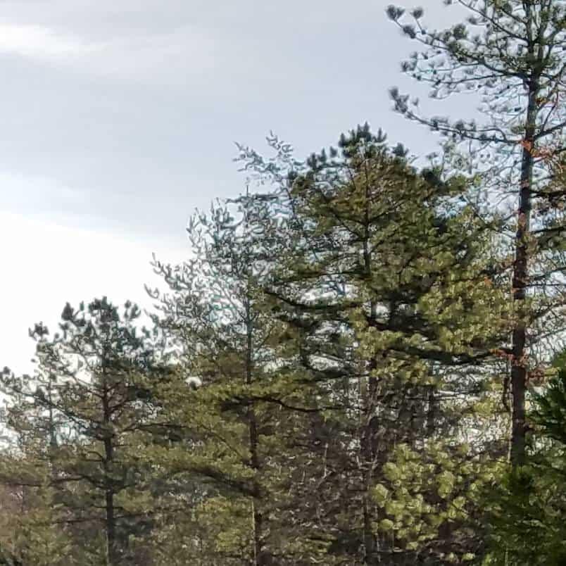 trees s7