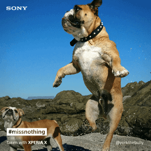 Sony Xperia X pet social post 2