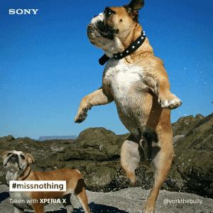 Sony Xperia X pet social post (2)