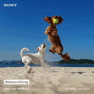 Sony Xperia X pet social post (3)