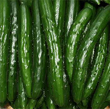 Tensorflow Cucumber Sorting 2