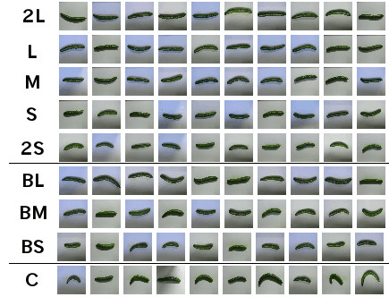 Tensorflow Cucumber Sorting 4