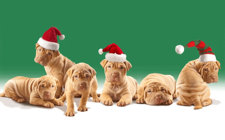 Pet Christmas Wallpaper HD top 10