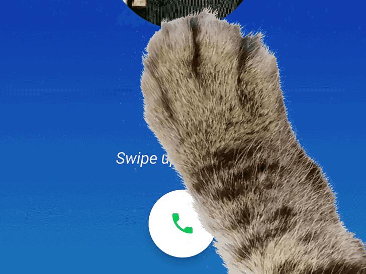 Google Phone Paw Mode AP 3