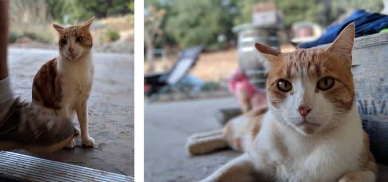 Google Pixel Portrait Mode Tips Example Photos 02