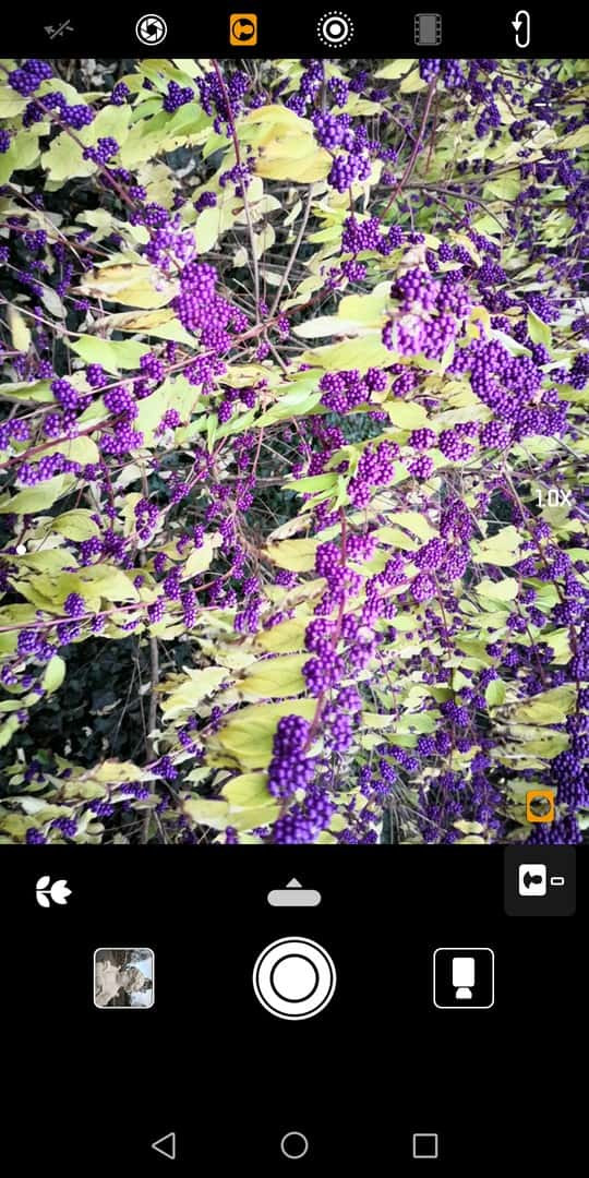 Huawei Mate 10 Pro AH NS screenshots camera plants