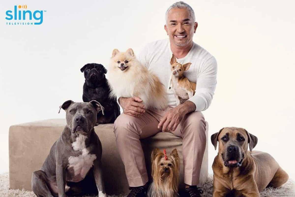Sling TV & The Dog Whisperer Partner On Shows Your Dog Will Love