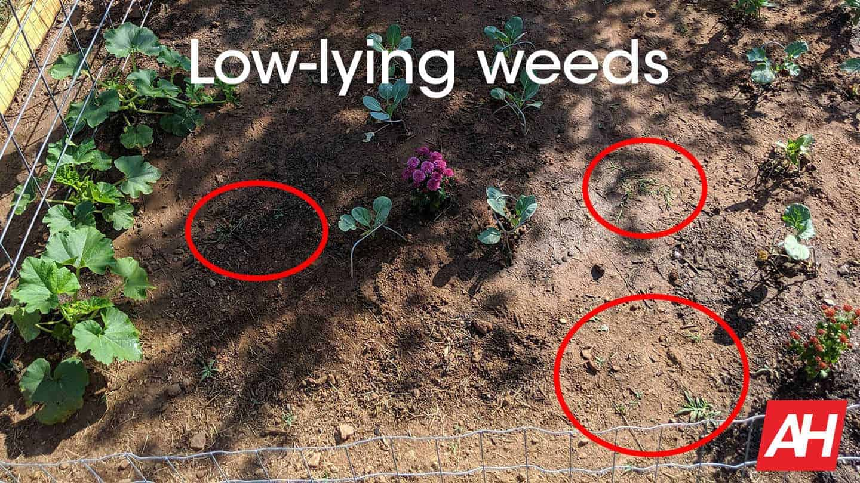 Tertill low lying weeds