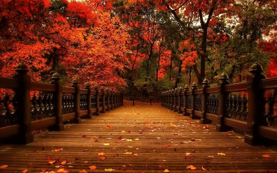 Autumn Puzzle app image 1