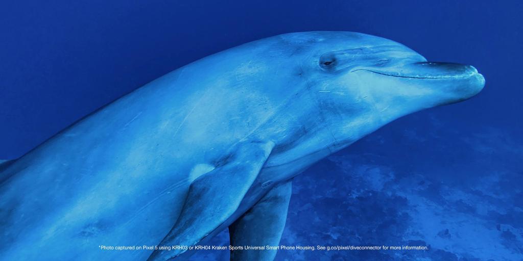 google pixel 5 underwater images 1