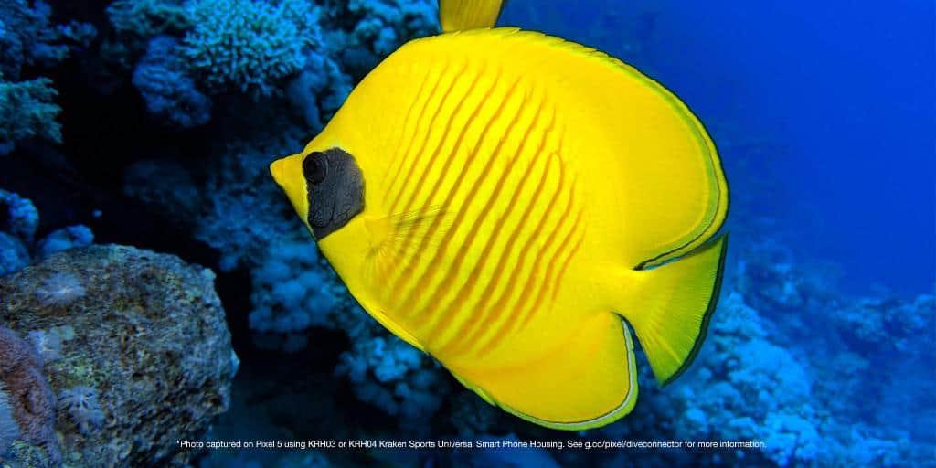 google pixel 5 underwater images 2