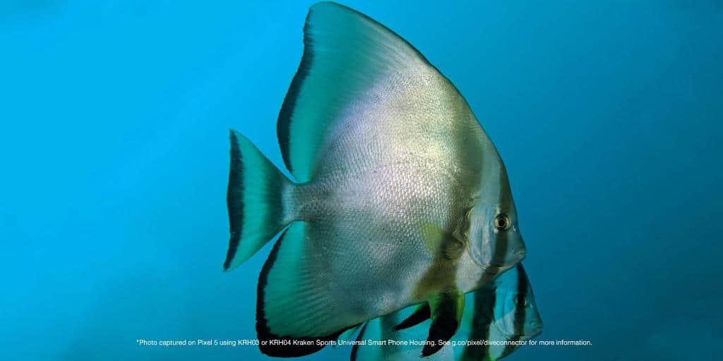 google pixel 5 underwater images 3