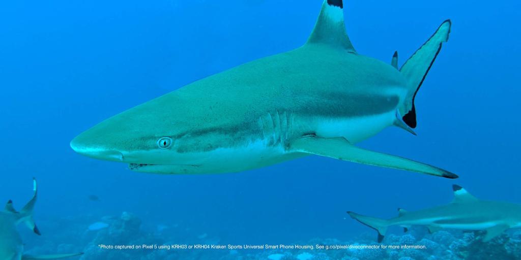 google pixel 5 underwater images 4